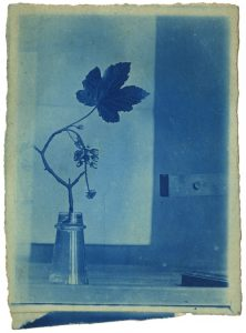 A cyanotype of unidentified plant within botany collections of the Papers of Sir Patrick Geddes held at the University of Strathclyde Archives and Special Collections (Ref: T-GED/18/6/5b)