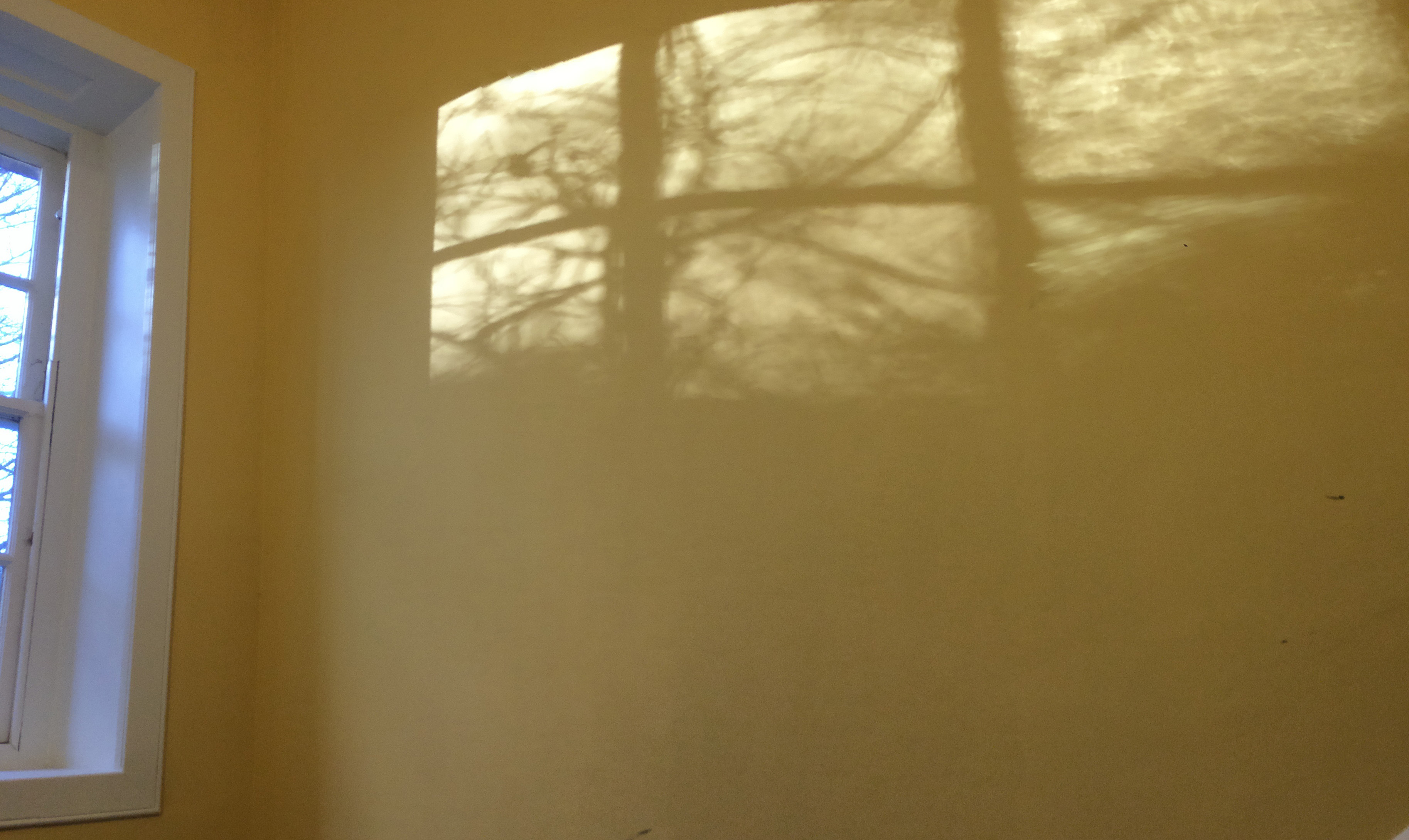 On a yellow wall there is a shadow from the window of trees in the garden