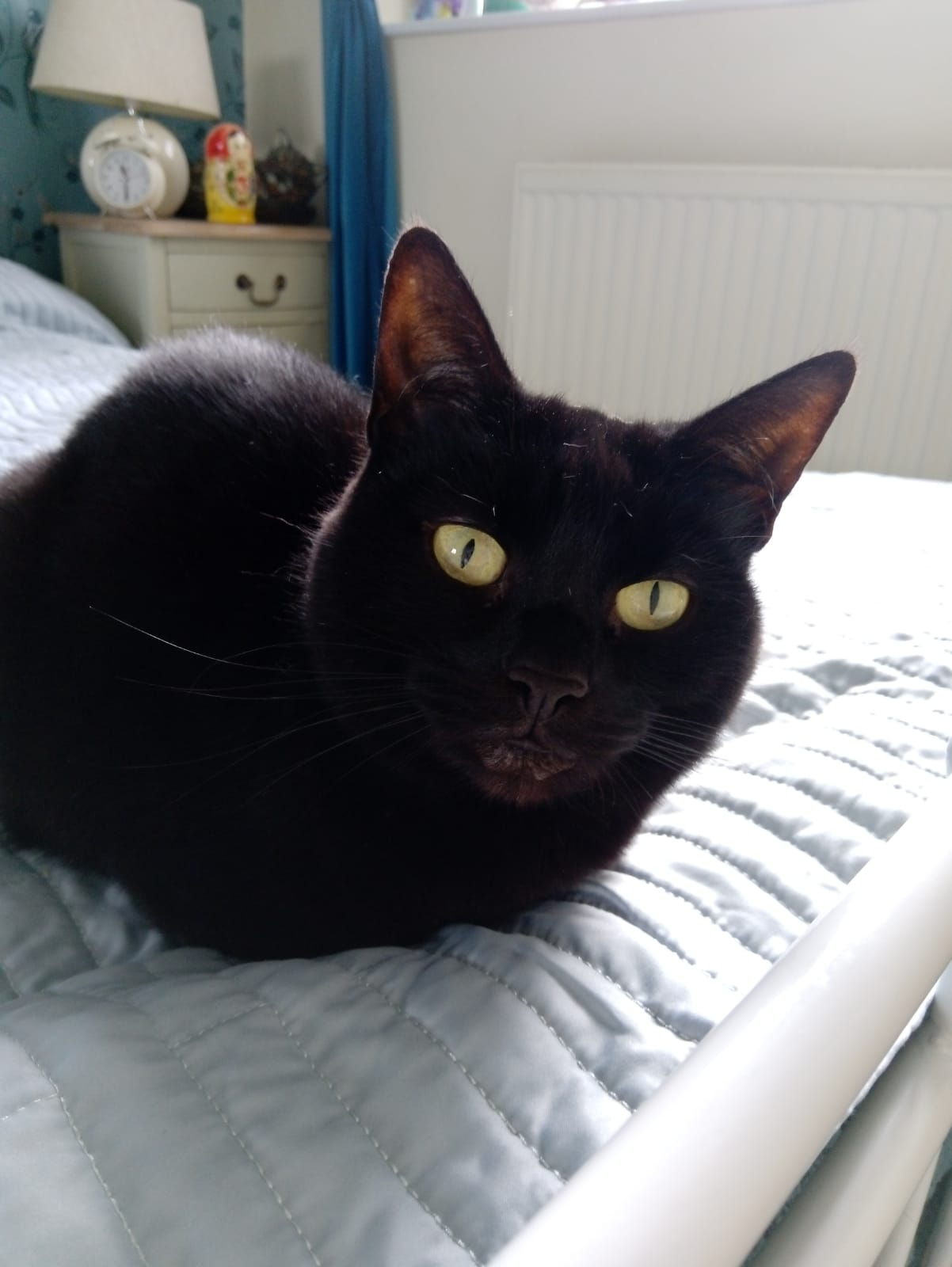 a sleek black cat with green eyes lies upon a bed