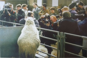 Dolly the sheep and press photographers, 1997 ©Murdo Macleod