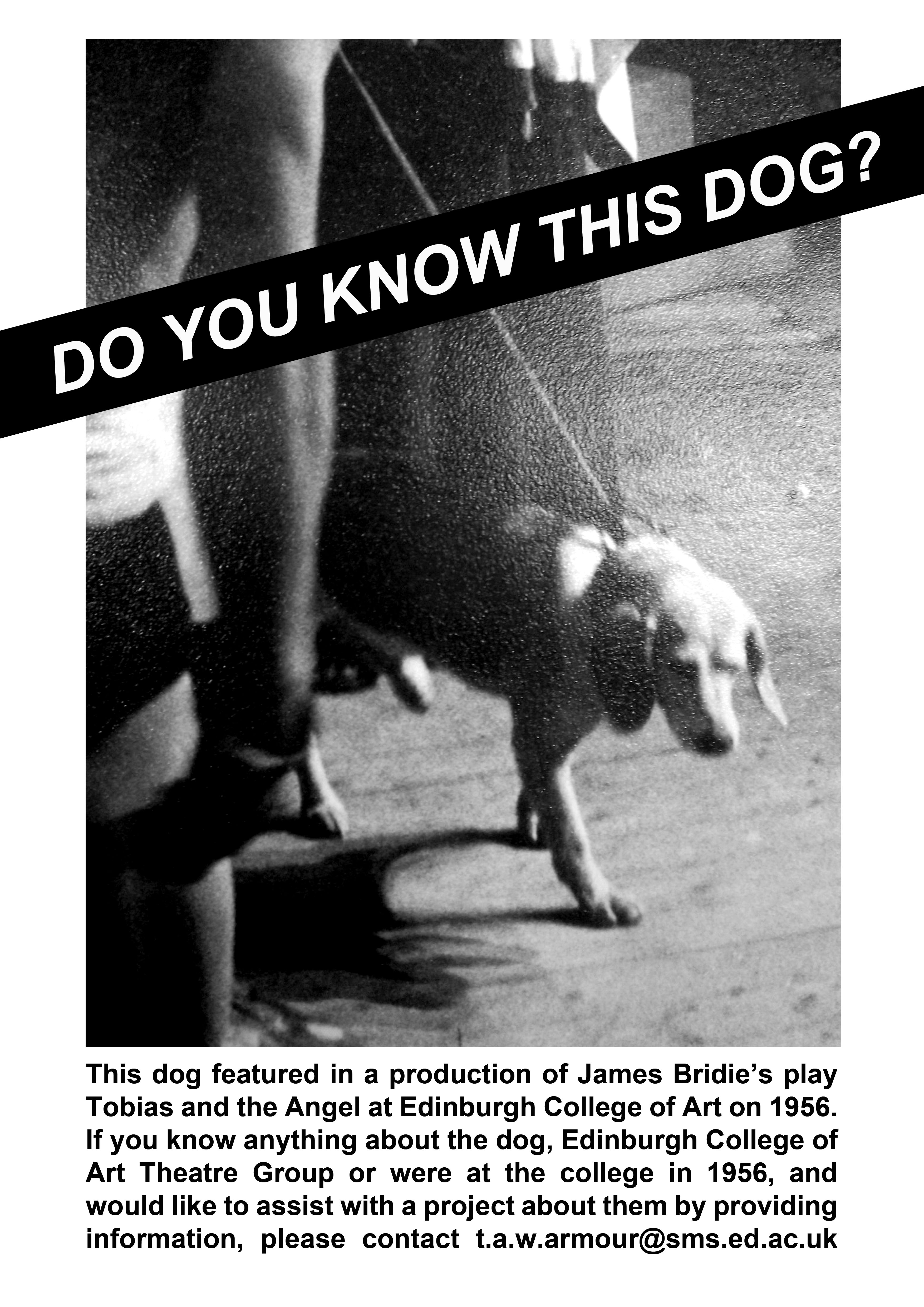 Do you know this dog?